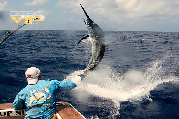 Renta de Yates para Pesca Deportiva en Cabo San Lucas